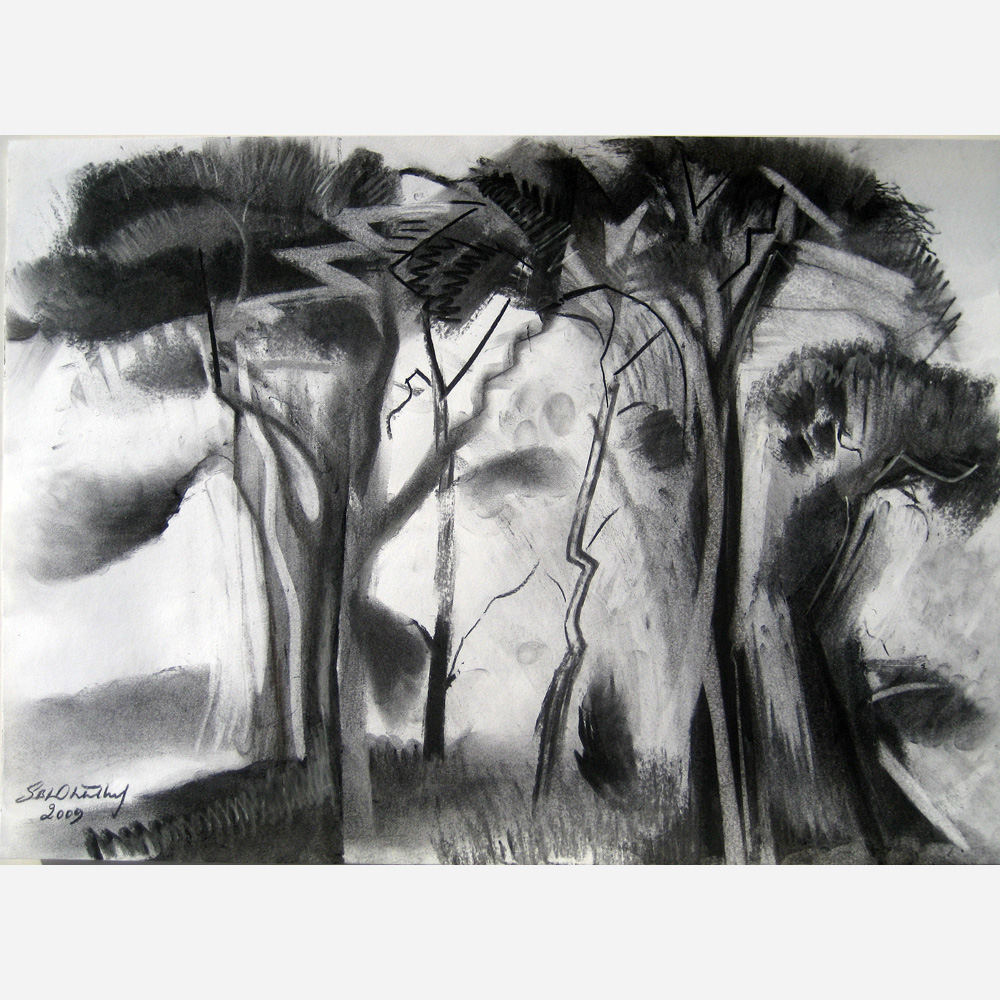 Ancient Pine Trees, Kesgrave. 2009 by Stephen B. Whatley