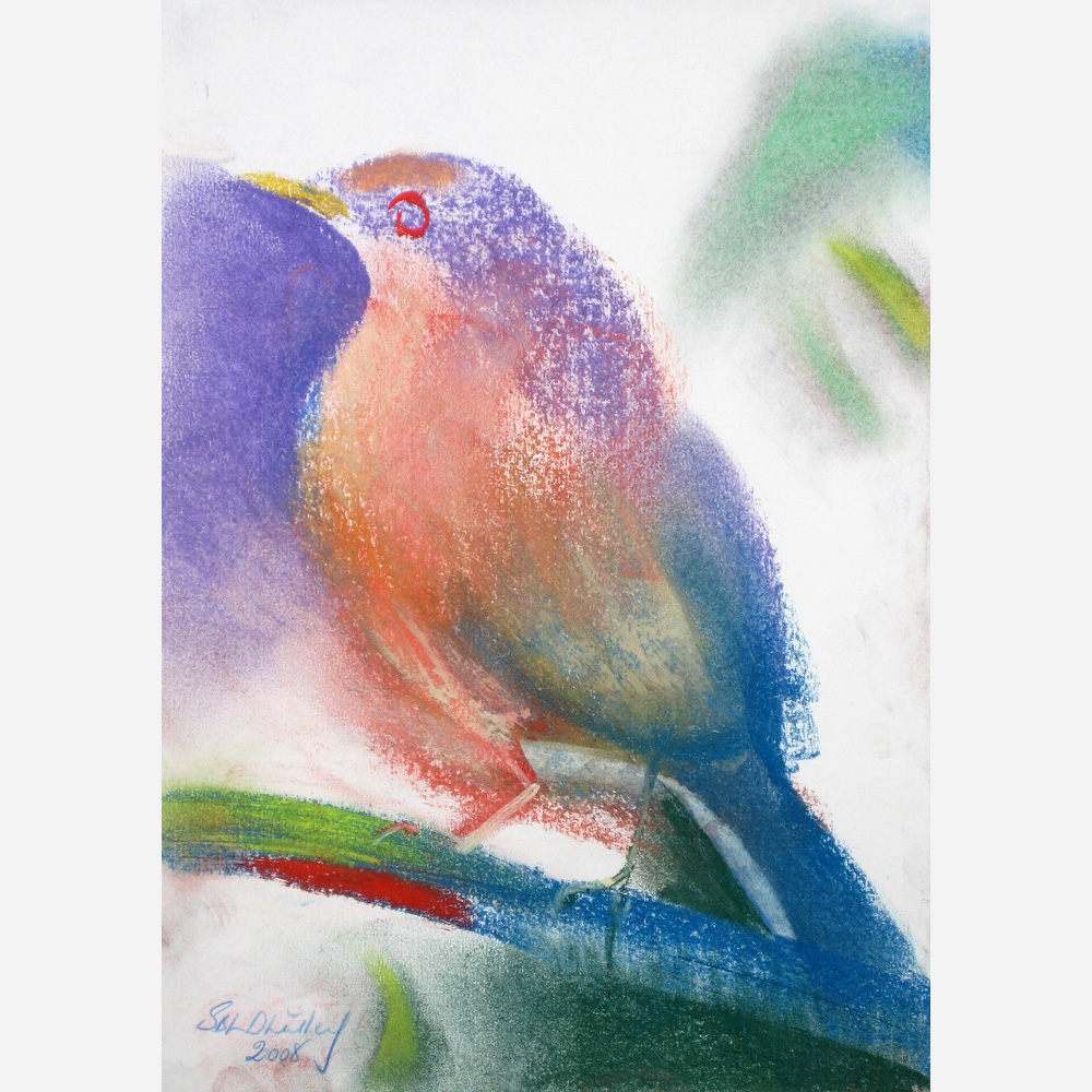 The Clay-Colored Robin. 2008 by Stephen B Whatley